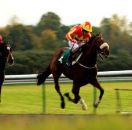 Apuestas de caballos en el hipódromo de Wolverhampton, 19 de diciembre